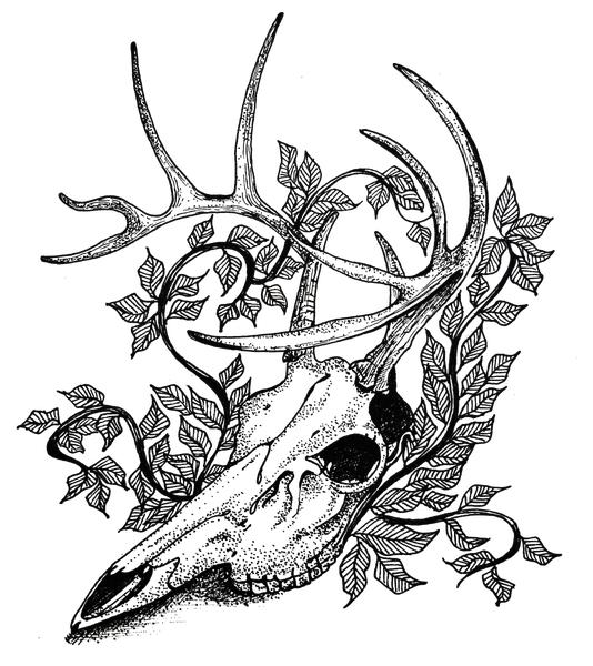 Skull by Sara Joseph