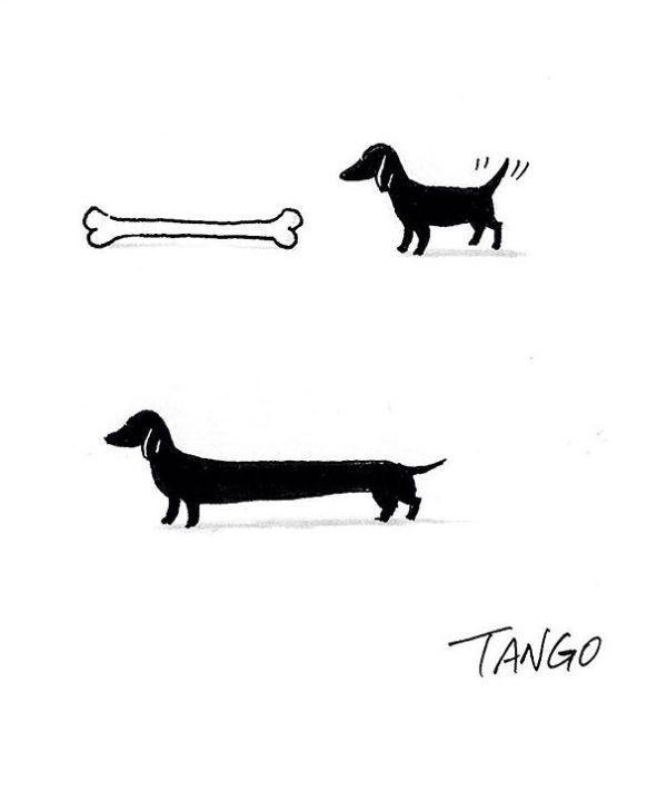 dog44
